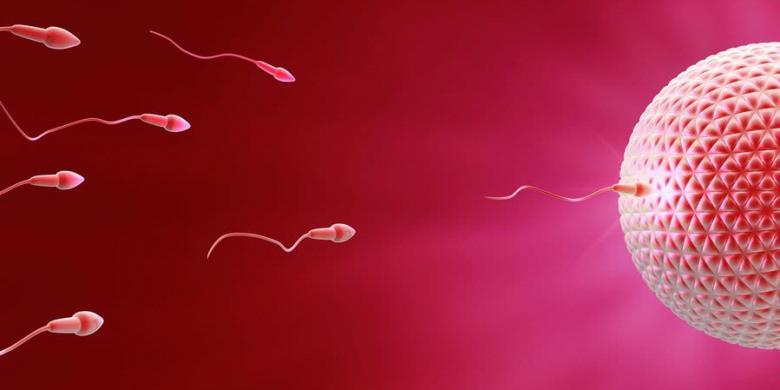 tips meningkatkan kualitas sperma